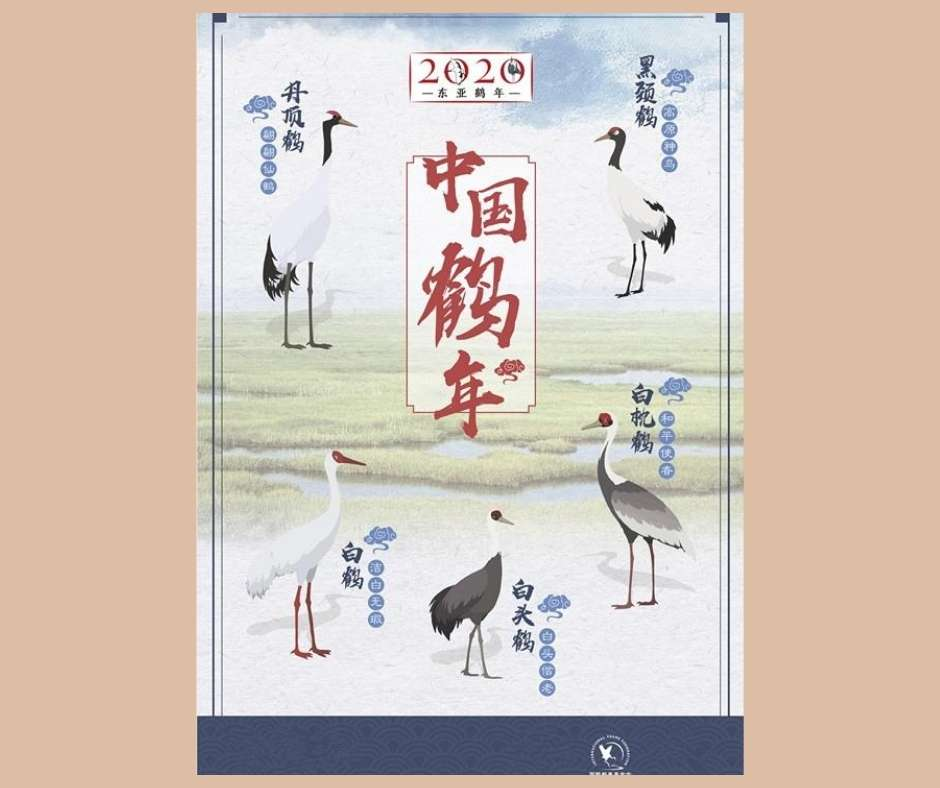 EAAFW poster of some East Asia Flyway cranes